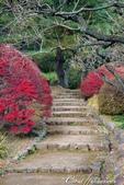 紅葉飄飄15日東京自由行--我在小石川植物園:41●在日本庭園的區塊內,各異奇趣的小徑也特別多,隨意走走,也有不同風光02.JPG