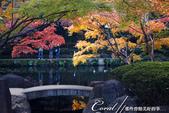 大田黑公園內的美麗楓情畫:DSC06918.JPG