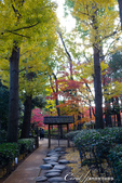 大田黑公園入口處長長的銀杏並木道:06.JPG