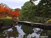 紅葉飄飄15日東京自由行--清澄庭園:24●欣賞池中的魚、水上的鴨和倒映在水中的樹,是來此庭園的一大樂事04.JPG