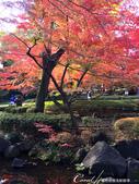 大田黑公園內的美麗楓情畫:IMG_2886.JPG