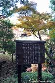 紅葉飄飄15日東京自由行--殿ヶ谷戸庭園:07●利用園區內的湧泉打造的次郎弁天池.JPG