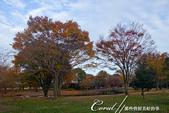 紅葉飄飄15日東京自由行--國營昭和紀念公園:32●秋天的景色,這是四季分明的過度才能享有的極緻體驗.JPG