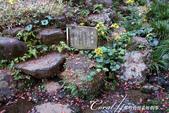 紅葉飄飄15日東京自由行--殿ヶ谷戸庭園:08●利用園區內的湧泉打造的次郎弁天池.JPG