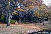 紅葉飄飄15日東京自由行--國營昭和紀念公園:43●很快地;藍天收起它的顏色,光線也漸暗下來.JPG