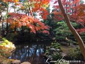 紅葉飄飄15日東京自由行--殿ヶ谷戸庭園:09●繞行弁天池一週,幾許涼意,幾許詩意.JPG