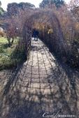 紅葉飄飄15日東京自由行--雖滿園蕭瑟卻也難掩風雅的向島百花園:18●園內有一座著名的胡枝子隧道,初秋時全長約30m的花的隧道上佈滿綠油油的枝葉與粉紫色的花,是觀賞的最佳時節,