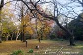 坐在小石川植物園內的樹下賞秋吧:02.JPG