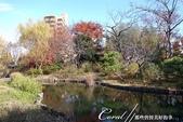 紅葉飄飄15日東京自由行--雖滿園蕭瑟卻也難掩風雅的向島百花園:21●由自然沼澤形成意趣橫生的池塘邊,佈滿應景的秋天植物,連芒草也看起來具有詩意04.JPG