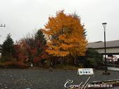 紅葉飄飄15日東京自由行--日光二荒山神社:●步出車站前的一棵大楓樹讓旅客們拍個不停.JPG
