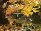 紅葉飄飄15日東京自由行--日比谷公園之美不勝收雲形池:●繞著雲形池賞楓光.JPG