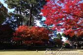 紅葉飄飄15日東京自由行--大田黑公園:25●圍繞池邊的散步道,讓人流漣忘返.JPG