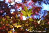 大田黑公園內的美麗楓情畫:DSC06926.JPG