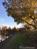 紅葉飄飄15日東京自由行--水光雲影、秋色無邊的水元公園:13●在沿著水域漫走的同時,孩童在對岸遊戲區的歡叫聲,一度打斷聆聽鳥語的意興,這也才驚覺,走了一段不算短的時