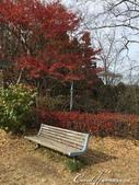 紅葉飄飄15日東京自由行--御岳山:●坐看城市在我腳下的御岳山登高之旅.JPG