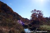 紅葉飄飄15日東京自由行--長瀞泛舟:43●秋天的顏色....JPG
