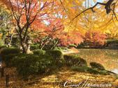 紅葉飄飄15日東京自由行--日比谷公園之美不勝收雲形池:●大自然傑作─紅橙黃綠繽紛配色的雲形池.JPG