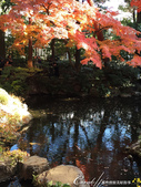 紅葉飄飄15日東京自由行--殿ヶ谷戸庭園:13●繞行弁天池一週,幾許涼意,幾許詩意.JPG