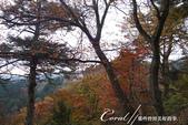 紅葉飄飄15日東京自由行--御岳山:●幾株紅葉點綴了山間的部份路段02.JPG
