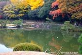 紅葉飄飄15日東京自由行--清澄庭園斑瀾的秋色:07.JPG