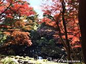 紅葉飄飄15日東京自由行--殿ヶ谷戸庭園:12●繞行弁天池一週,幾許涼意,幾許詩意.JPG