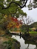 紅葉飄飄15日東京自由行--清澄庭園斑瀾的秋色:13.JPG