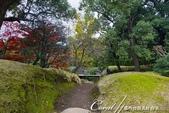 紅葉飄飄15日東京自由行--清澄庭園:37●有那麼一絲像童話森林的畫面.JPG