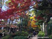 紅葉飄飄15日東京自由行--大田黑公園:30●庭園內栽種著杉樹、櫸樹等百年樹木,因此成為東京紅葉名所之一.JPG
