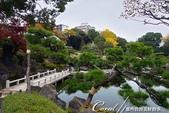 紅葉飄飄15日東京自由行--清澄庭園:47●四季之美皆有不同,來庭園走走!讓風光取代五光十色,為旅程留下精彩回憶.JPG