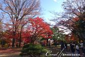 紅葉飄飄15日東京自由行--殿ヶ谷戸庭園:35●前景是楓紅,背景是藍天的好風光.JPG