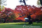 紅葉飄飄15日東京自由行--大田黑公園:29●庭園內栽種著杉樹、櫸樹等百年樹木,因此成為東京紅葉名所之一.JPG