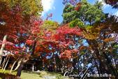 紅葉飄飄15日東京自由行--殿ヶ谷戸庭園:05●懸崖上方的紅葉亭內,滿滿的賞楓遊客.JPG