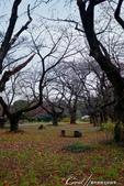 紅葉飄飄15日東京自由行--我在小石川植物園:57●餘光中的來時路,目送我離開植物園.JPG