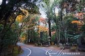 ●成田山公園充滿逸趣的小徑:DSC08397.JPG