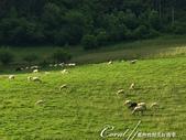 2018不思議之克、斯、義秘境歐遊記(8~3)--阿爾卑斯山城小鎮 Sillian 錫利安的恬靜小時:41●隨著吃草羊群的移動,脖子上叮叮咚咚的鈴聲,也成為至今依舊徘徊耳際的聲音.JPG