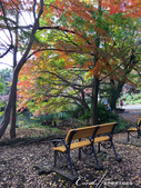 紅葉飄飄15日東京自由行--井之頭恩賜公園:37●這是如同城市綠洲一般存在的美麗公園.JPG