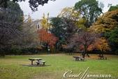 紅葉飄飄15日東京自由行--清澄庭園:41●有那麼一絲像童話森林的畫面.JPG