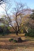 紅葉飄飄15日東京自由行--閃耀著童話森林般迷人色彩的小石川植物園:21●樹的千姿百態.JPG