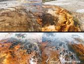 2019自駕隨性之旅(05)--100個死前必去景點之黃石國家公園(中間歇泉噴地、大稜鏡溫泉篇):22●奇異的地質景觀還包括藻類與黏乎乎的金黃色真菌,一種名為嗜熱細菌水生棲熱菌.png