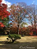紅葉飄飄15日東京自由行--殿ヶ谷戸庭園:18●園區內較高處屬西式風格的寬闊草坪,與低處以次郎弁天池為中心的日式庭園,構成日西合璧獨特風貌.JPG