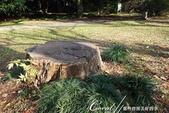 坐在小石川植物園內的樹下賞秋吧:03.JPG