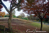紅葉飄飄15日東京自由行--國營昭和紀念公園:29●秋天的景色,這是四季分明的過度才能享有的極緻體驗.JPG