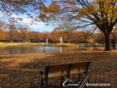 紅葉飄飄15日東京自由行--代代木公園:24●長椅上;有我今生最難忘的秋的回憶.JPG
