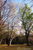 紅葉飄飄15日東京自由行--閃耀著童話森林般迷人色彩的小石川植物園:24●樹的千姿百態.JPG