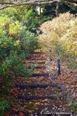 紅葉飄飄15日東京自由行--我在小石川植物園:08●朝著指標方向,踏著石階,穿過與上半場風情截然不同的林蔭,前往日式庭園.JPG