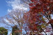 紅葉飄飄15日東京自由行--殿ヶ谷戸庭園:34●前景是楓紅,背景是藍天的好風光.JPG