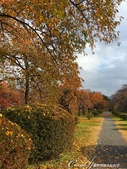 紅葉飄飄15日東京自由行--閃耀著童話森林般迷人色彩的小石川植物園:29●無論是金黃色的康莊大道,或是帶點遐想通往未知的枯黃色林蔭,園區內處處都精采.JPG