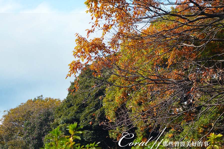 紅葉飄飄15日東京自由行--我在小石川植物園:09●被繽紛色彩環抱著的一池靜靜地、盛裝著零星落葉,及倒影著天空的秋水於小徑的盡頭映入眼簾.JPG