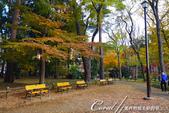 紅葉飄飄15日東京自由行--井之頭恩賜公園:02●悠靜的散步道,是拜訪公園的第一印象.JPG