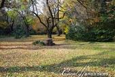 紅葉飄飄15日東京自由行--閃耀著童話森林般迷人色彩的小石川植物園:20●樹的千姿百態.JPG